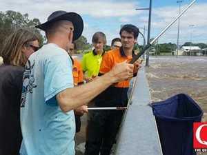 Man catches snakes on Ipswich bridge