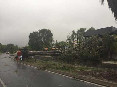 A tree down in Noosa after the community was hit by a severe thunderstorm.