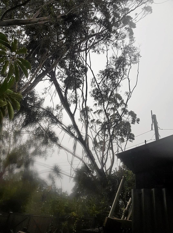 Trees rest on powerlines at Tinbeerwah near Noosa.