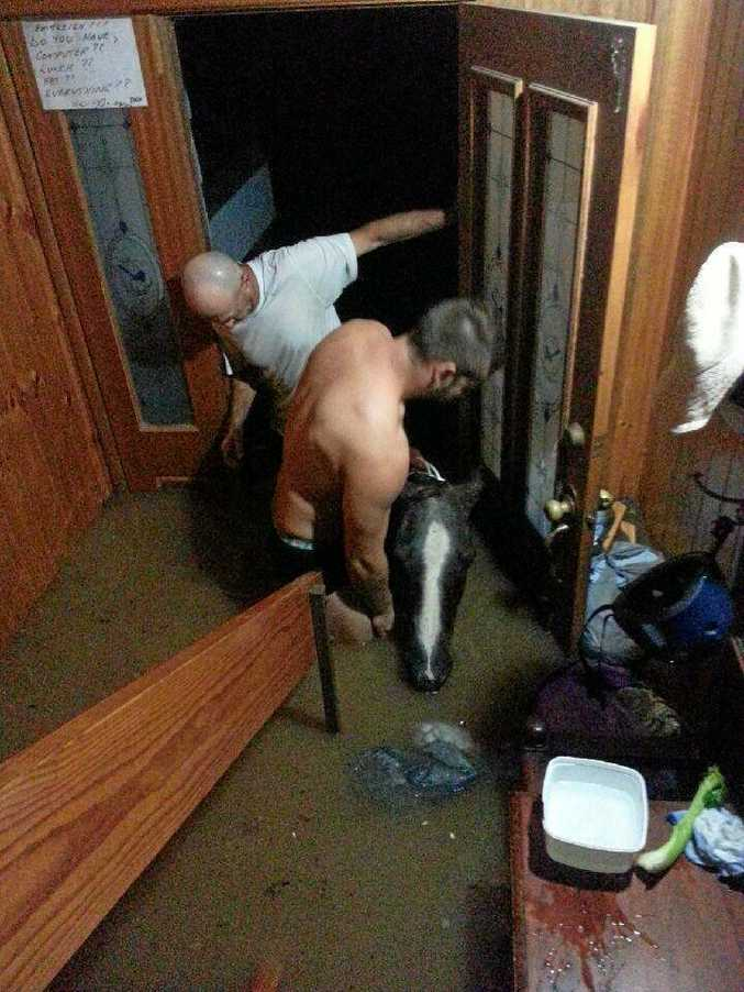 Uki residents help exhausted horse.