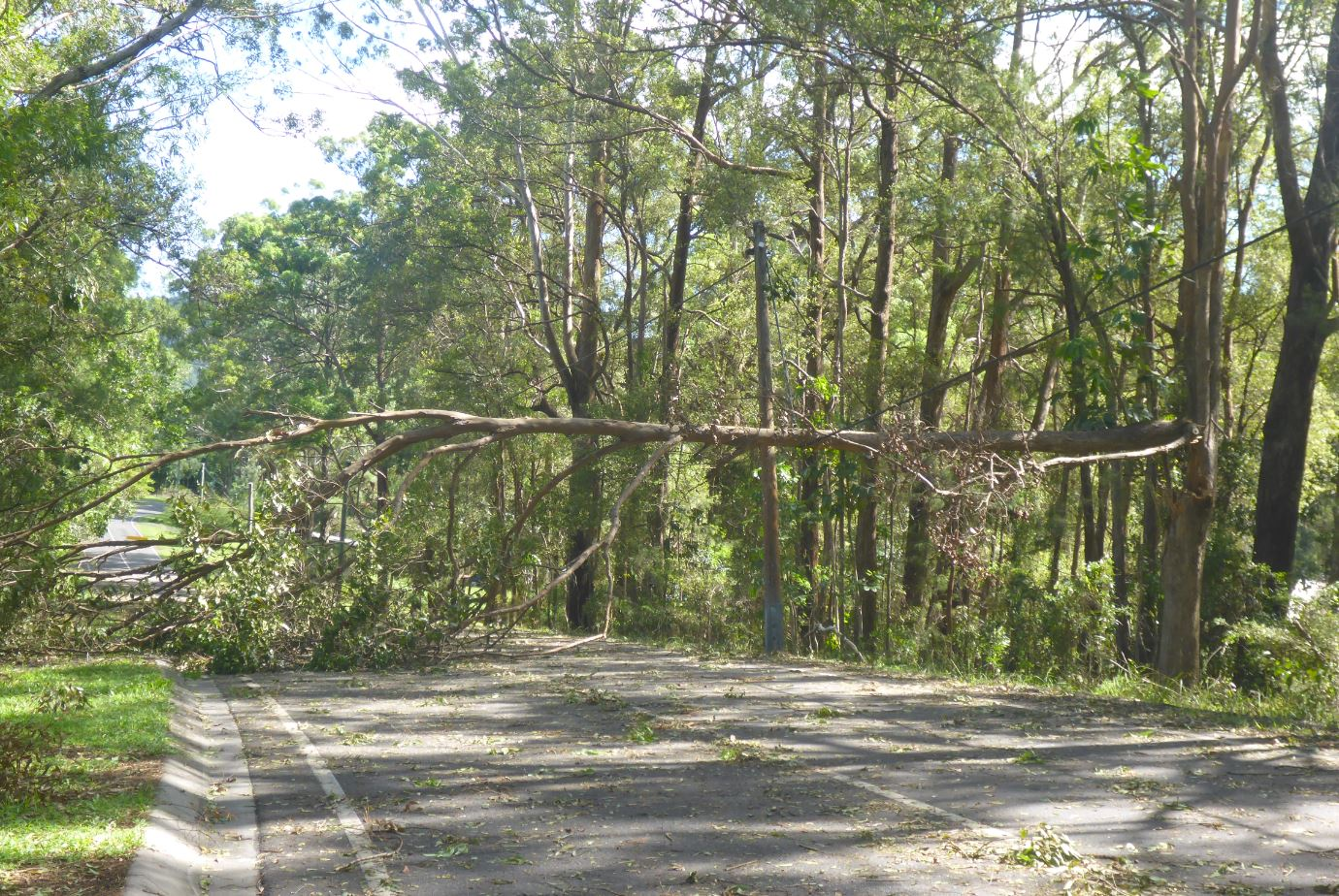 Widespread power outages plunged the Sunshine Coast into darkness last night, with tens of thousands still without power today.