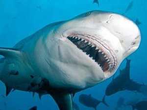 Authorities warn of increased shark activity during floods