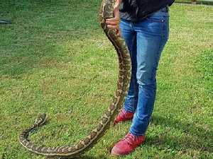 Beware snakes on the move as floodwaters recede