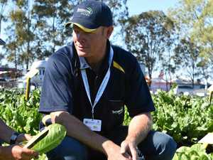 Lockyer veggie crops in top form despite flooding