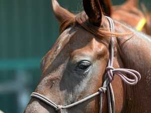 Unvaccinated horse events a 'serious concern'