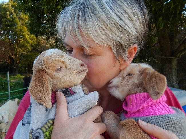 Fe Everett from Zodiac Mini Goats is one of the biggest breeders of miniature goats in NSW.