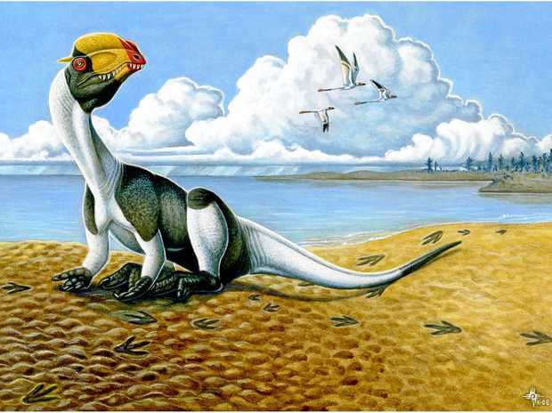 CARNIVORE: A theropod dinosaur. Tracks have been found of theropods in the Ipswich-Rosewood coalfields.