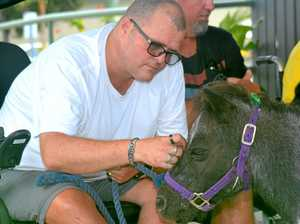 Murphy the mule star of the show at aged care facilities