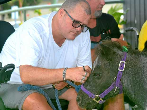 HEALING ANIMALS: Joe Howells pats miniature pony Oreo.