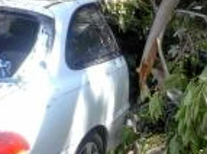 A tree fell on Penelope Richards' car with her baby inside during the storm from ex-Cyclone Debbie last Thursday.
