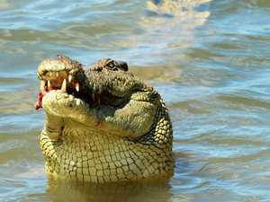 'Scariest moment of my life' as croc attacks dog