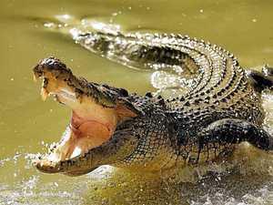 UPDATE: Report croc sightings, Department urges