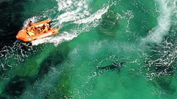 Footage from shark drones operating at Ballina, Lennox Head, Evans Head, Redhead and Kiama.