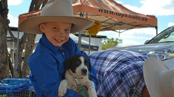 CUTE POOCH: Murdoch Sharpe cuddles one of the working dog puppies at Wandoan Show.