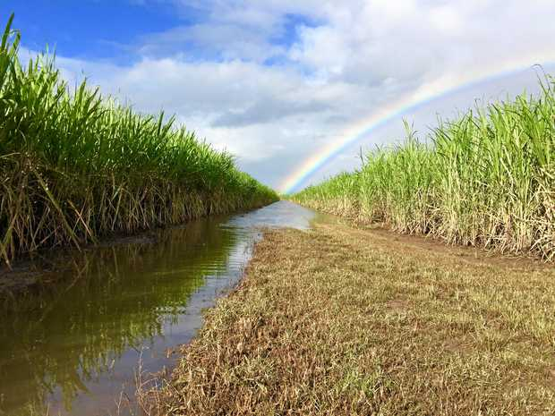 A rainbow brings some sparkle to cane fields in the aftermath of the Tweed floods.