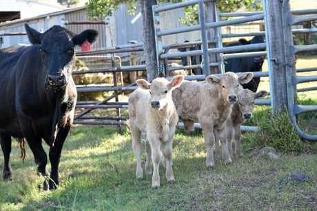 BABIES: The triplets, which made the pages of the Gatton Star in May 2016, have grown significantly.