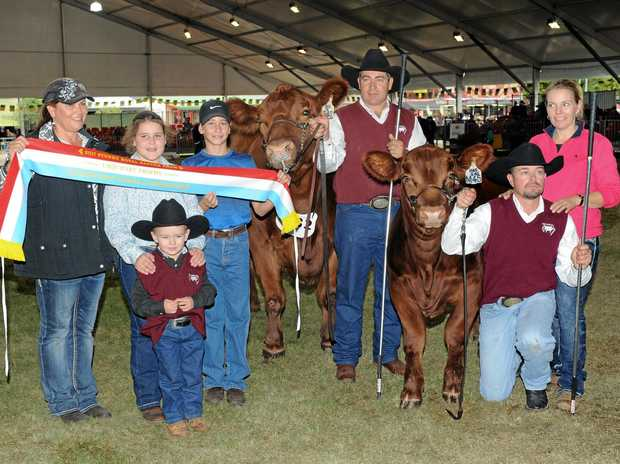 WINNERS: Gavin Iseppi, Nathan Stevens, Fiona McWilliam and Kody Stevens with the winning cow and her calf.