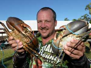 WATCH: 'Tough': High-risk race to tie crabs at CQ pub