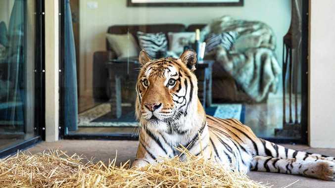 ANIMAL ENCOUNTERS: Sleep with the animals at Jamala Wildlife Lodge and Aquarium in Canberra.