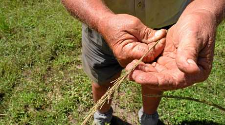 Jim Elliot owns properties throughout the region where he tackles to eradicate Rats Tail Grass.