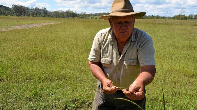 NASTY STUFF: Jim Elliot says the government has a lot to answer for over rat's tail grass. A meeting on the issue will be held in Gladstone.