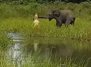 Croc puts bite on Elephant