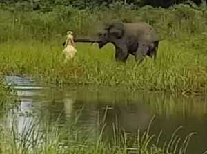 Crocodile V elephant in brutal animal kingdom battle