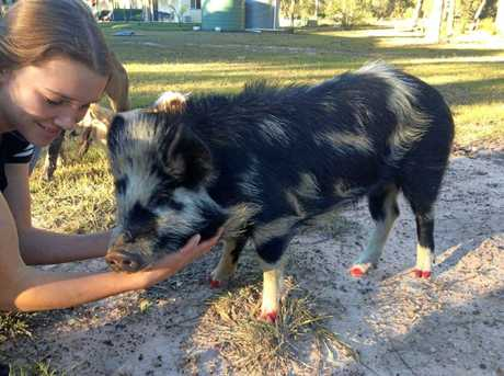 Skye Houliston enjoys hanging out with her pet pig Adele on the family property.