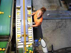 Juicy fruit! Bundy region leads citrus export explosion