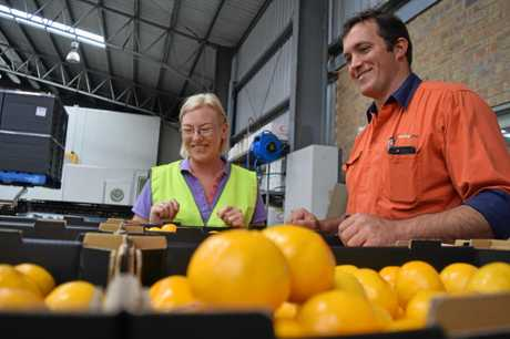 JUICY FRUIT: Leanne Donaldson and Michael McMahon at Abbotsleigh Citrus.
