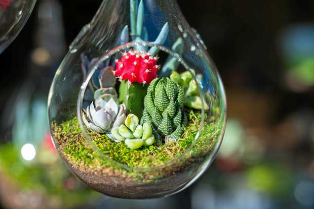 GET CRAFTY: Make a tiny terrarium at a BRAG workshop tonight.