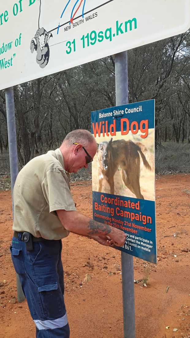 BAITING: Wild dog baiting is beginning in the Balonne Shire again.