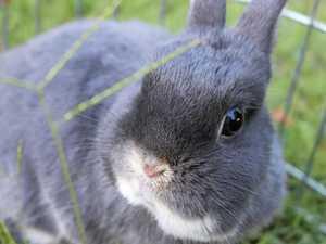 Rabbit dumping 'hot spot'