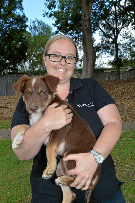 PUPPIE POWER: Rebecca Ballyantyne with Milo from Red Collar Rescue will be supporting the Family Fun Day this weekend in Bundaberg.