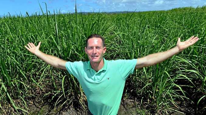 Adam Benjamin of Medifarm wants to supply medicinal cannabis and hopes to transform the canelands of the Sunshine Coast into Potlands.