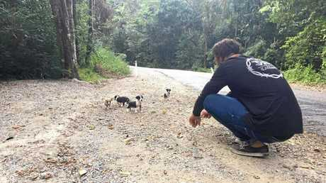 Five puppies were dumped at Maleny near Gardners Falls yesterday. They were rescued and have been taken to Safe Haven Animal Rescue for rehoming.
