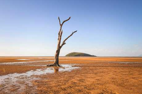 The Shoal Point 'lone tree' before it was apparently deliberately set on fire.