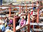 Crowds flock to Stanthorpe horse sale