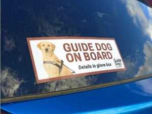 What to do if a guide dog is in a car crash