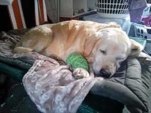 Dog home safe after four years lost in wild