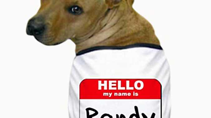 RANDY TIMES: A dog named Randy was stolen this morning from the Ipswich pound by it owner, who has been charged.
