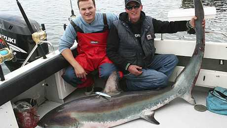 A thresher shark caught on a lure off Portland, Victoria.