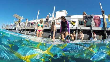 Sunlover Reef Cruises.