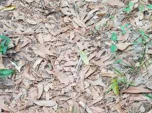 Can you spot the venomous snake lurking in the leaves?