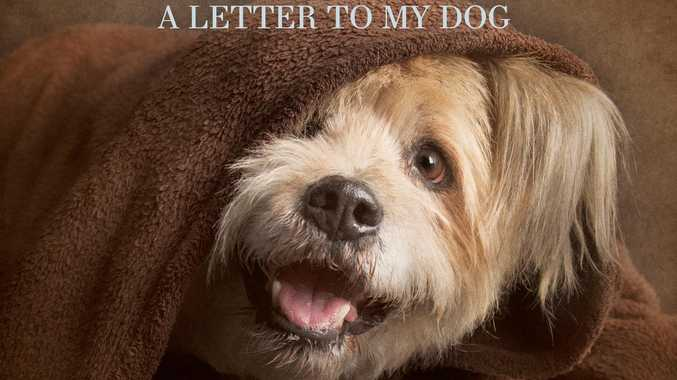 Fur Ever Loved A Letter To My Dog