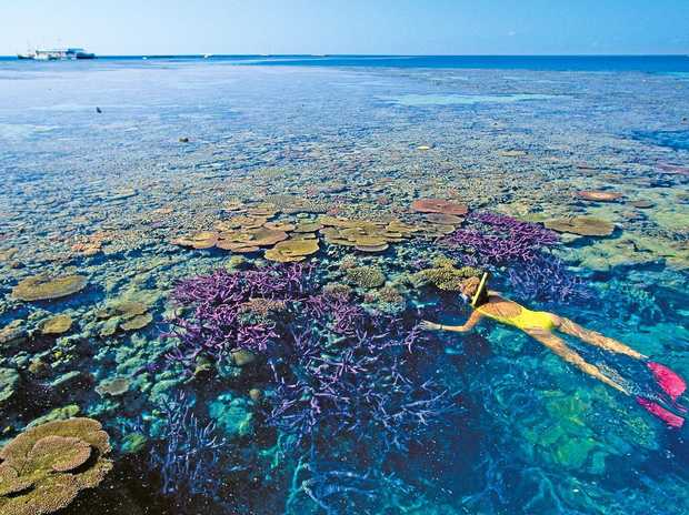 Snorkelling is one of the many fun activities on the Great Barrier Reef.