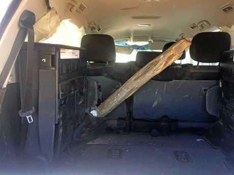 Tree impaled vehicle in car crash