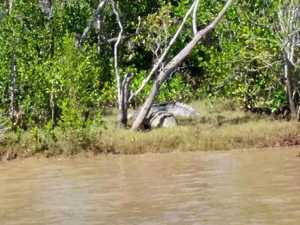 'Biggest I've seen': Terrifying croc spotted in Rocky river