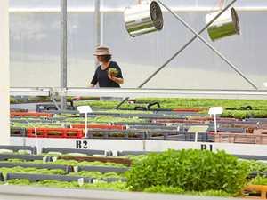 Micro-greens making a home at Burringbar