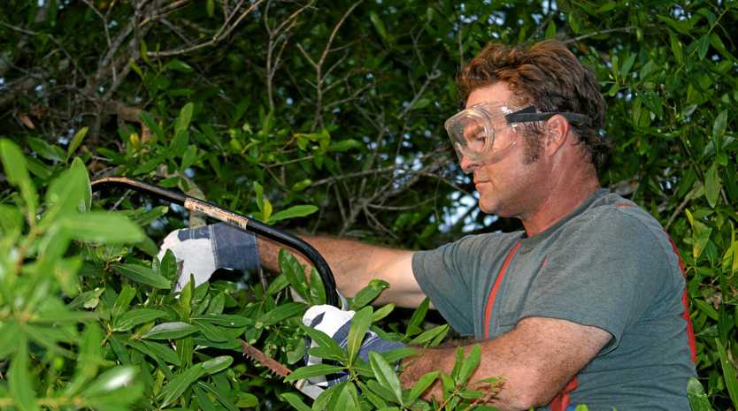Unhealthy, weak trees are hazardous and may need trimming or removal. If in doubt, consult an arborist.